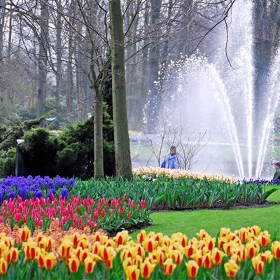 Tulips of Holland 2022