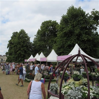 Hampton Court Flower Show 2021