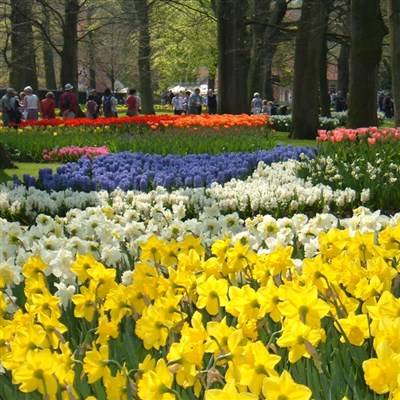 Tulips of Holland 2021